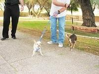 Blessing of the Animals 2011 59